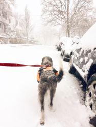 031517.snow-5