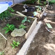 I placed the stone down on top of a thin layer of the mortar, and made sure each stone was lined up with it's neighbor, sitting flat. After they were all laid down, I painstakingly put dry mortar mixture in the cracks and sprayed it down with water. As always, Harlow is always very helpful.
