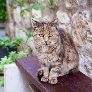 More beautiful cats