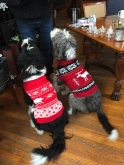 The dogs wore sweaters (Bootsie at left)