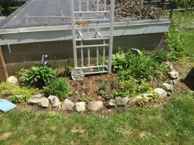 I had hoped that my wisteria would grow and attached to this trellis, but alas, I killed it. So, I have to come up with something else to cling to it.