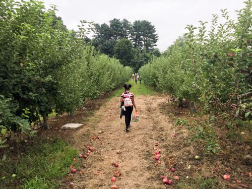 In search for good apples!