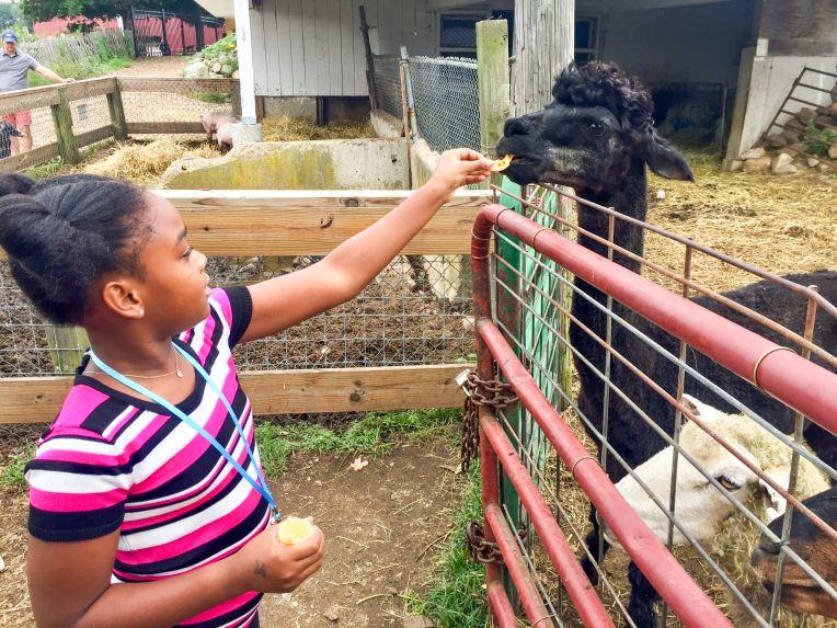 The alpaca/llama with boyband hair