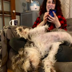 Harlow loves Dori's lap