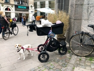 Prams are a thing here. They're everywhere. So are dogs.