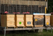 Up the hill form their home, bees make honey. I brought some home (don't tell customs!)
